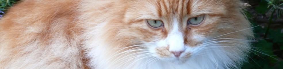 soigner coryza chat naturellement