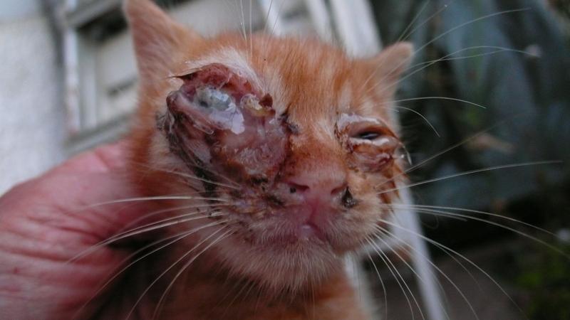 Images et commentaires i les chats de syros - Comment empecher un chat d uriner partout ...