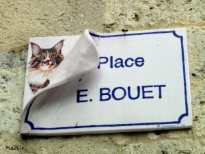 chat-La-Romieu-4
