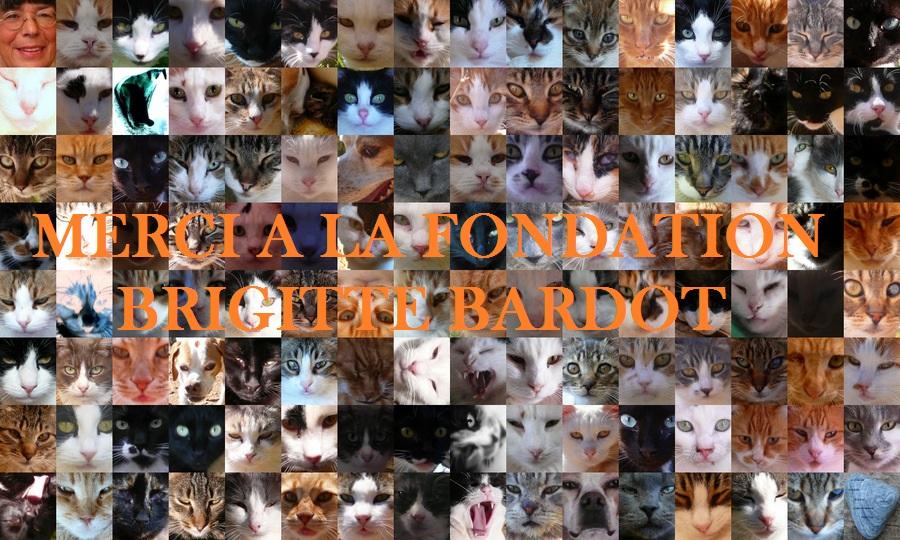 1-les chats de syros - portraits-001