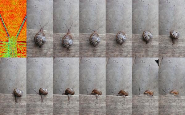 1-escargot