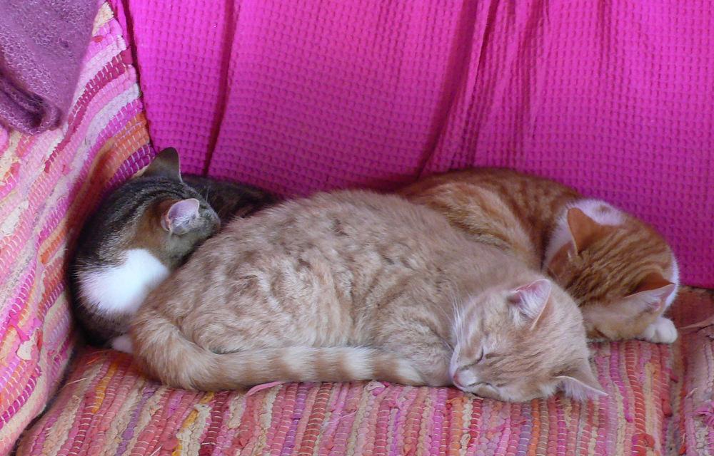 Juste avant la temp te les chats de syros - Gens qui font l amour tout nu dans le lit ...