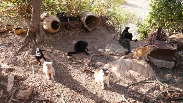 Petit groupe des chatons du matin...