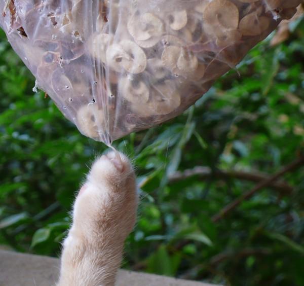 Louis-Rose et le sac de graines