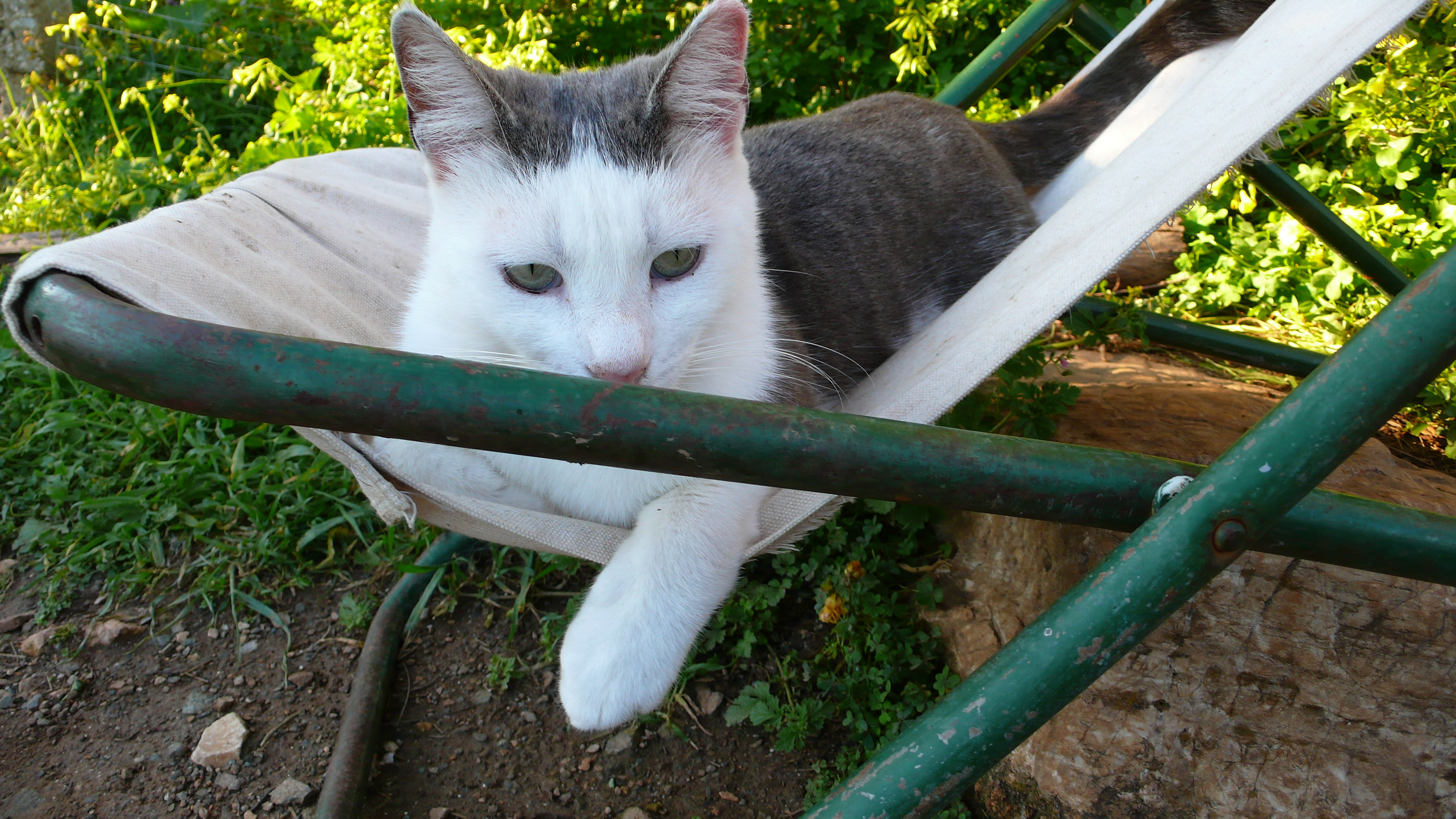 Homme Chat Rat Salle De Bain ~ bob les chats de syros