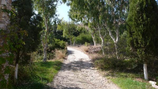 L'allée qui monte vers l'autre versant de la vallée : ils possèdent les deux versants. Plein d'arbres, vraiment sublime propriété.