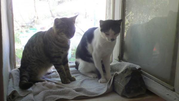 Monostou et P'tit Loustic sur le rebord de la fenêtre de la salle de bains