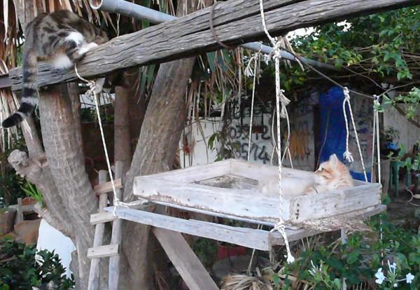 Nekosan dans le hamac à chats, et qui n'a pas envie de Clotilde vienne l'emmerder