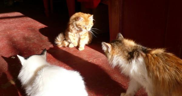 Rencontre Teddy, Kéti et Nekosan sur le pas de la porte