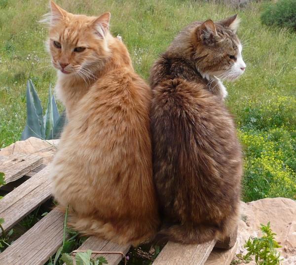 Loulpu et Vincent