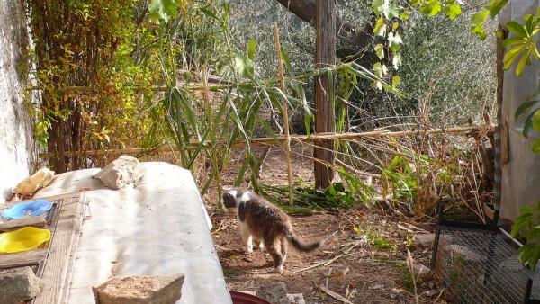 Portails en roseaux, histoire de décourager les oies d'aller boire dans le récipient des chats (et ça marche !)