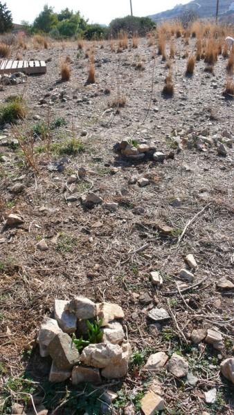 Essai de végétalisation du champ du bas par des succulentes